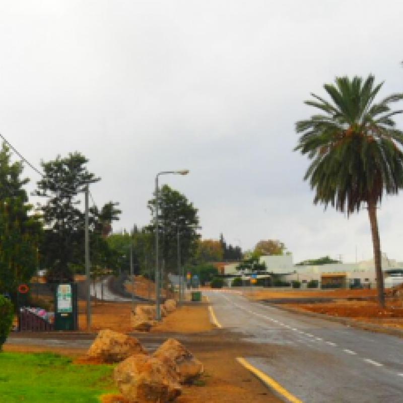 Blick entlang der Straße gesäumt mit Palmen im Kibbutz