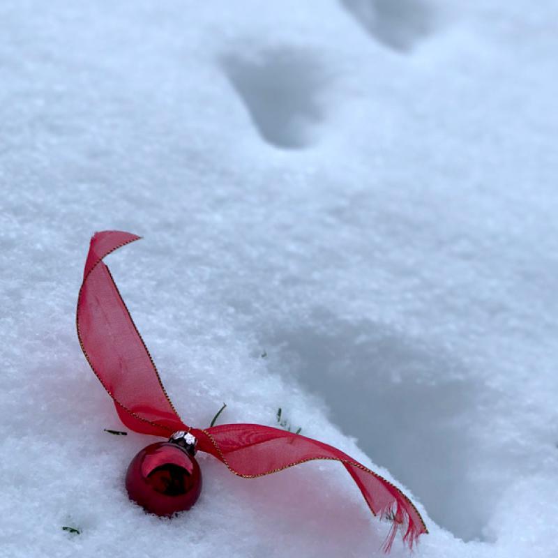 Katzenspuren im Schnee und eine rote Christbaumkugel