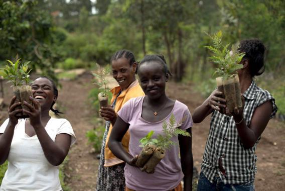 Äthiopische Frauen mit kleinen Sträuchern in der Hand bei der Wiederaufforstung