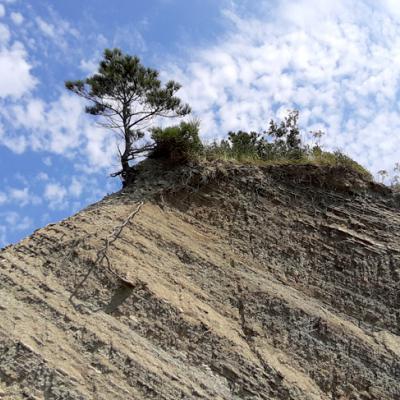 Detailaufnahme eines Felsens