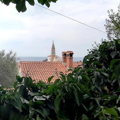 Blick von oben über die Altstadt